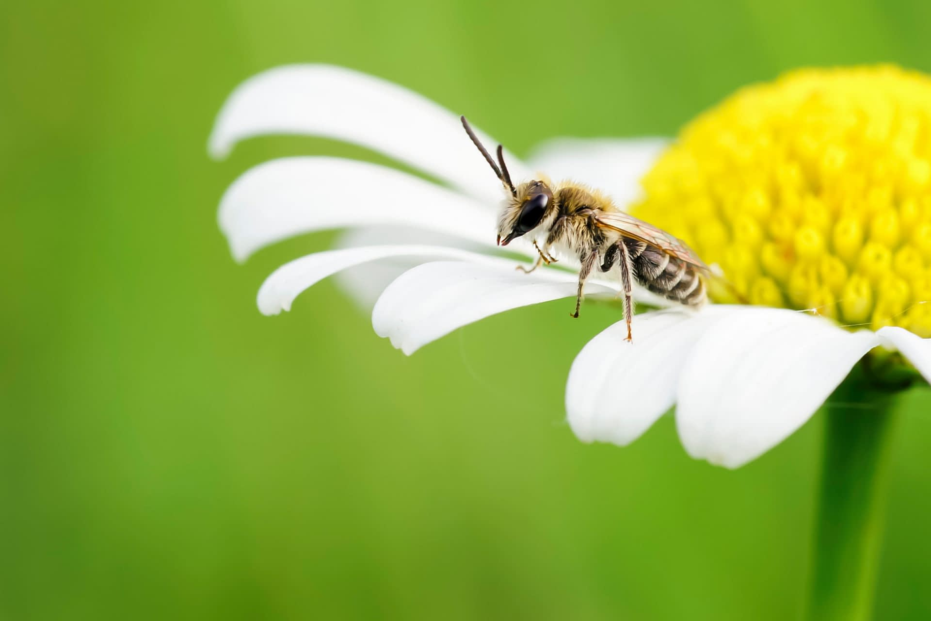 20,f10,ISO320 Biene Blume_00